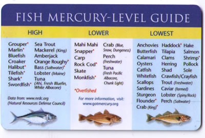 how come they 39 re happy and i 39 m not happy fish ForFish With High Levels Of Mercury